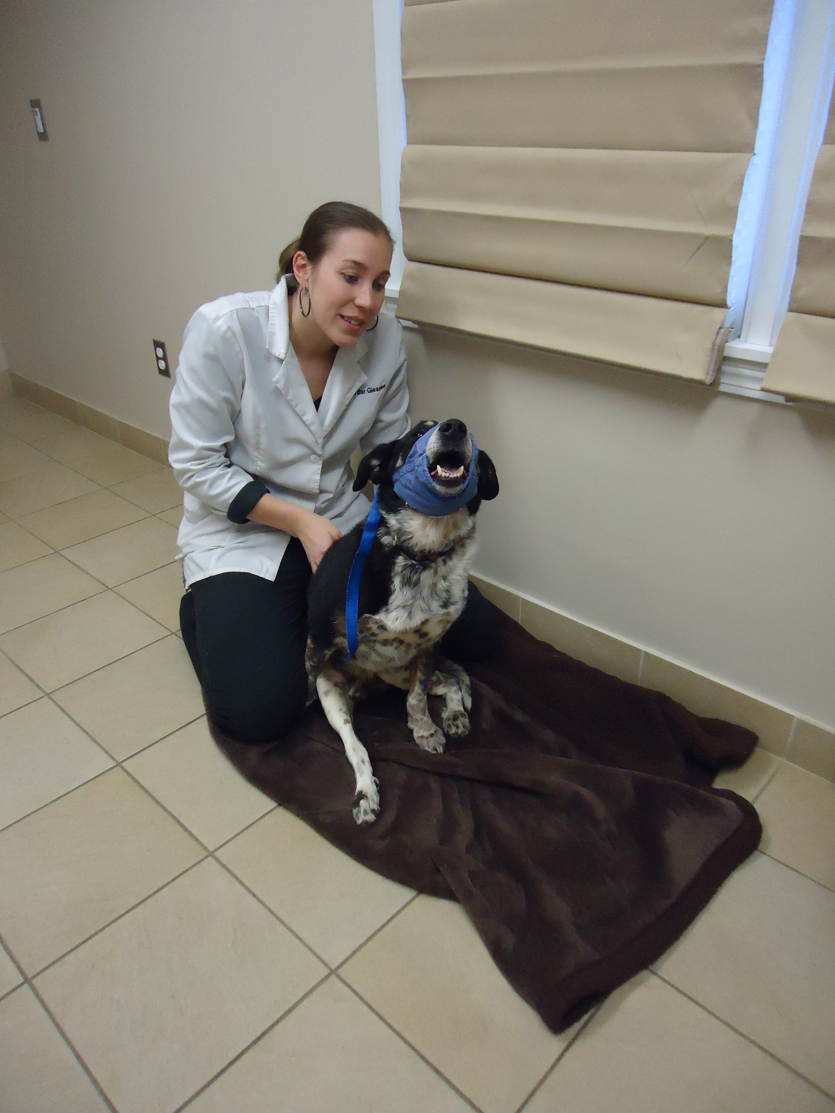 Roaring Brook Veterinary Hospital and Kennels